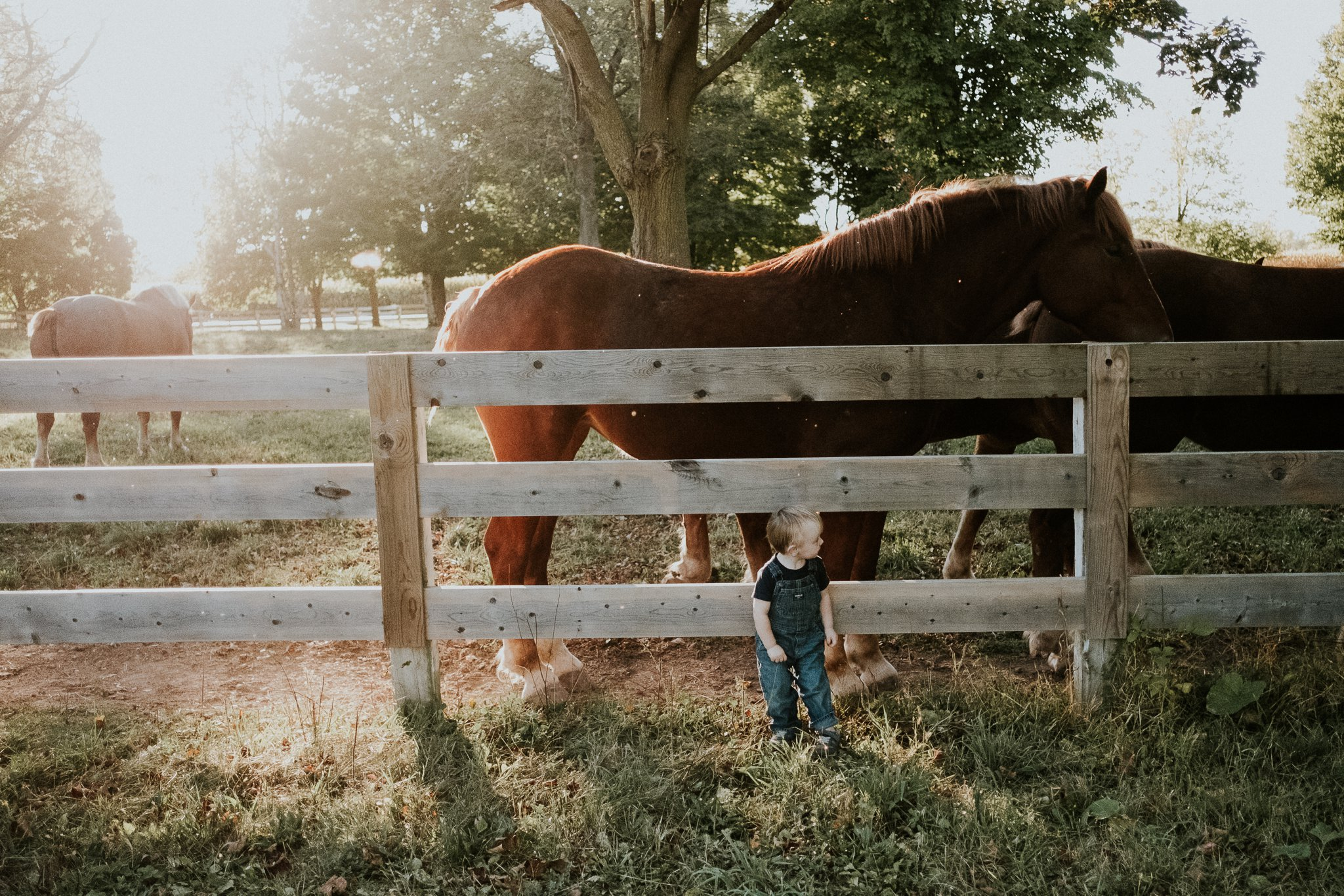 Farm Mini Sessions